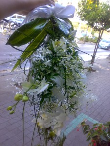 Rami di phalaenopsis